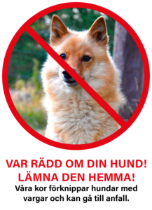 Var rädd om din hund! Lämna den hemma! Våra kor förknippar hundar med vargar och kan gå till anfall.